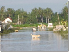 2011_10_14 Bangkok Flooding