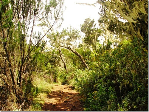 Kilimanjaro Plant Life (14)