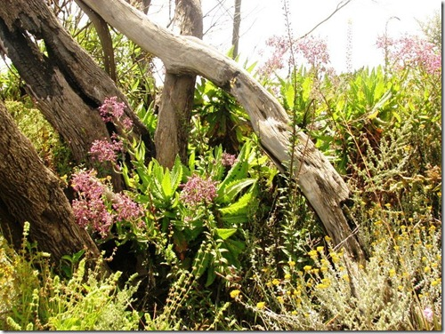 Kilimanjaro Plant Life (17)