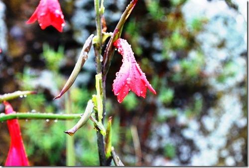The Plant Life of Kilimanjaro (2/6)