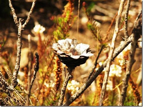 Kilimanjaro Plant Life (27)