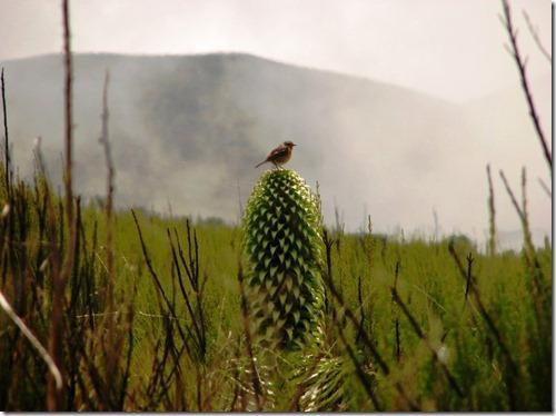 Kilimanjaro Plant Life (31)