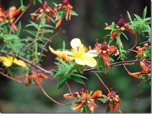 The Plant Life of Kilimanjaro (4/6)