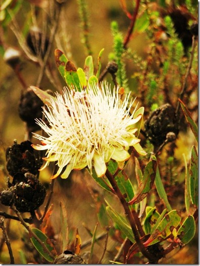 Kilimanjaro Plant Life (4)