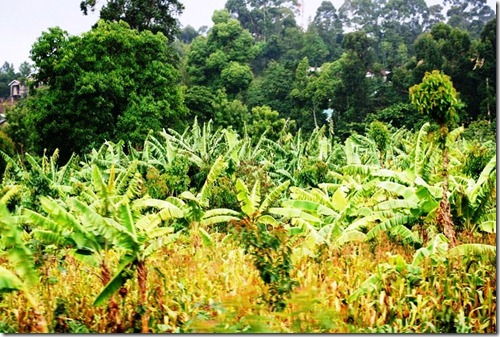 Kilimanjaro Plant Life