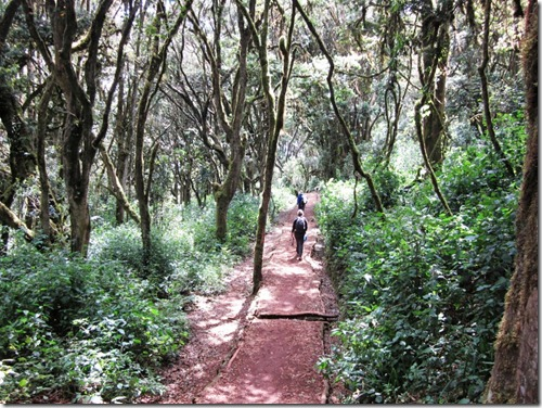 The Routes of Kilimanjaro (3/6)