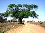 Chaco back road, Paraguay