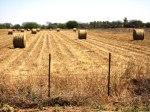 Mennonite farmer's field, Paraguay