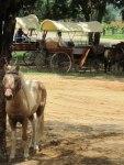 Chokchai Dairy Farm, Khao Yai, Thailand