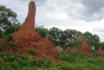 Termite mounds near Solwezi, Zambia