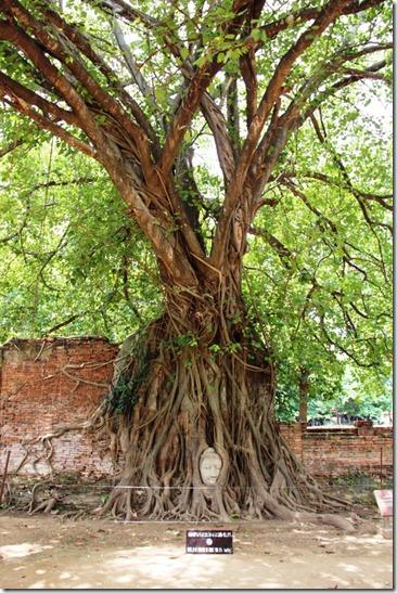 2012_08_31 Wat Mahathat (9)