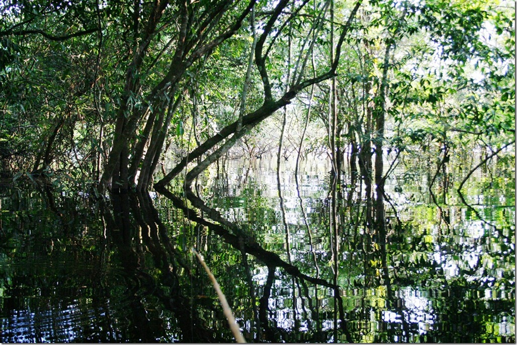 2008_07_18 Brazil Piranhas (1)