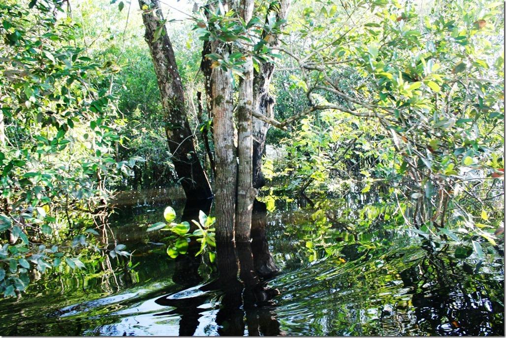 2008_07_18 Brazil Piranhas (2)