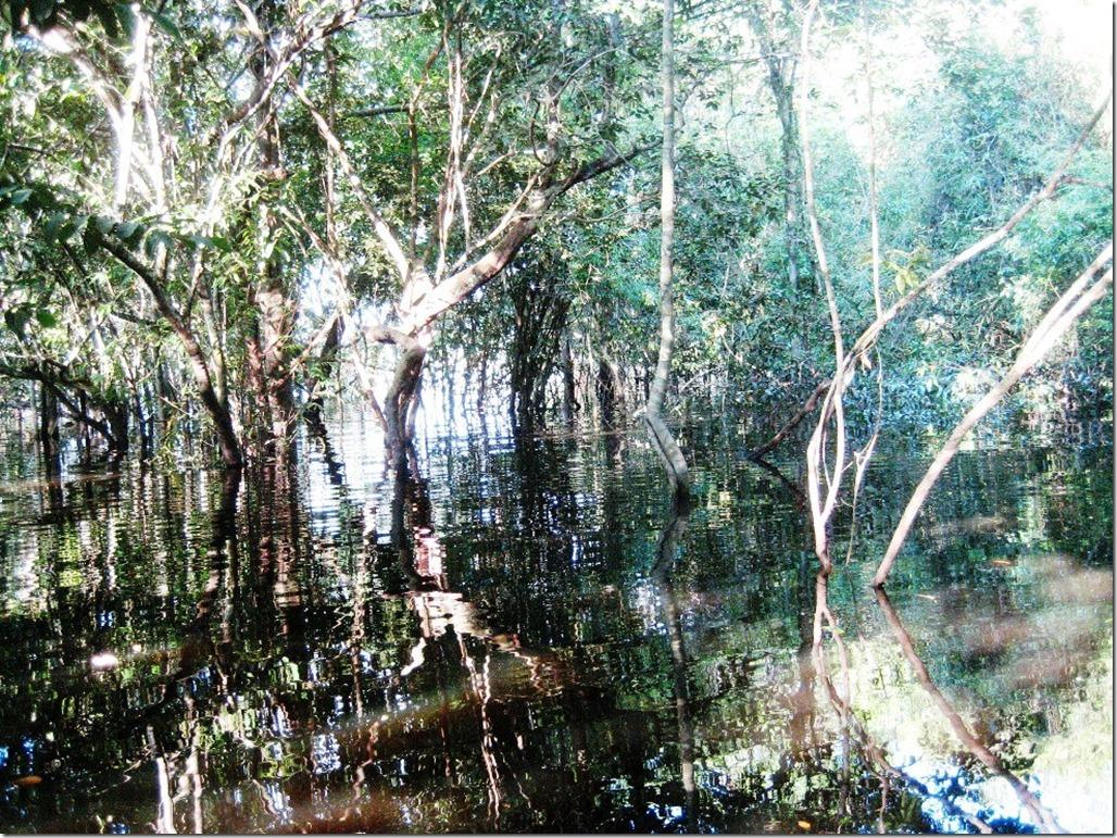 2008_07_18 Brazil Piranhas (3)