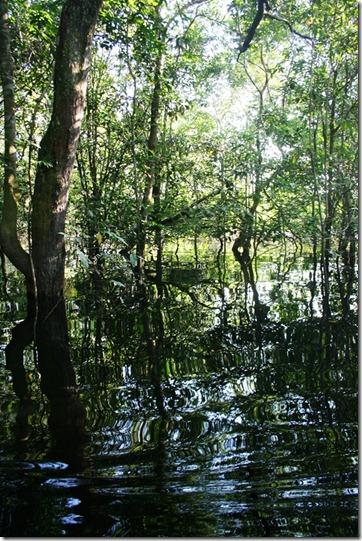 2008_07_18 Brazil Piranhas (4)