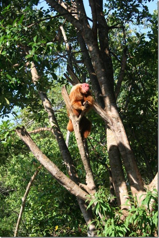 2008_07_17 Brazil Amazon Monkey Park (10)