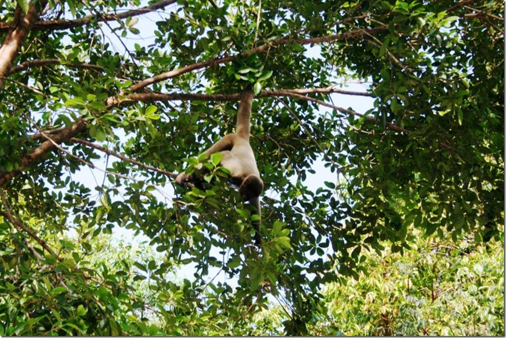 2008_07_17 Brazil Amazon Monkey Park (12)