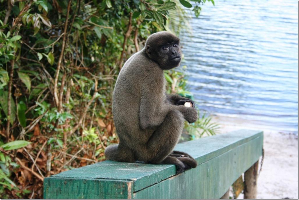 2008_07_17 Brazil Amazon Monkey Park (13)