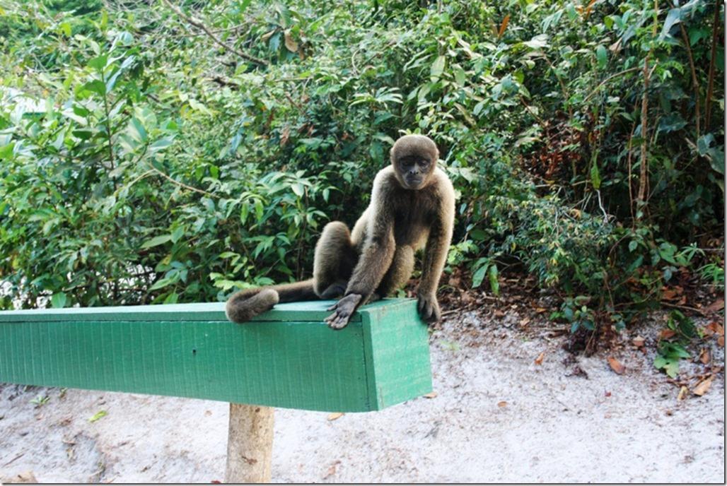 2008_07_17 Brazil Amazon Monkey Park (14)