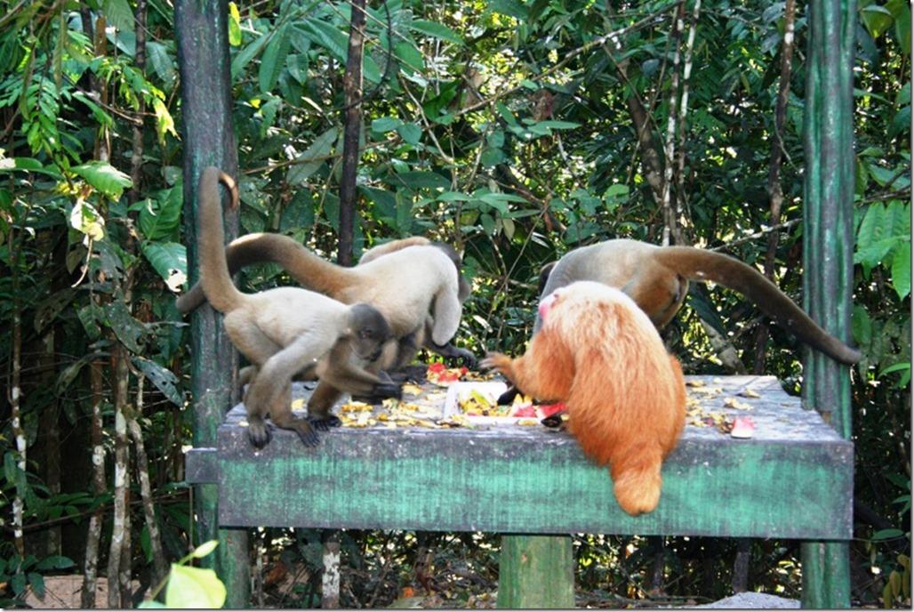 2008_07_17 Brazil Amazon Monkey Park (15)