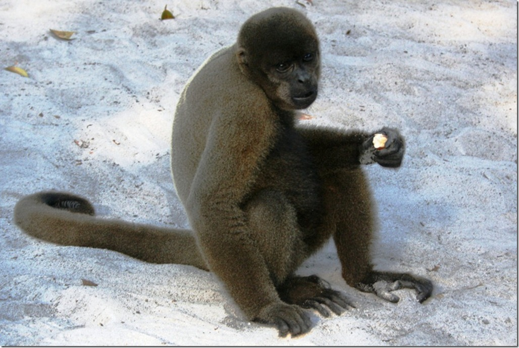 2008_07_17 Brazil Amazon Monkey Park (2)