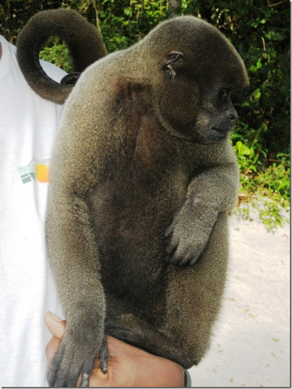 2008_07_17 Brazil Amazon Monkey Park (3)