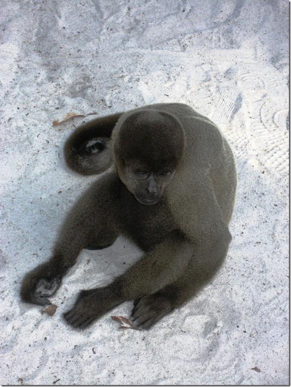 2008_07_17 Brazil Amazon Monkey Park (4)