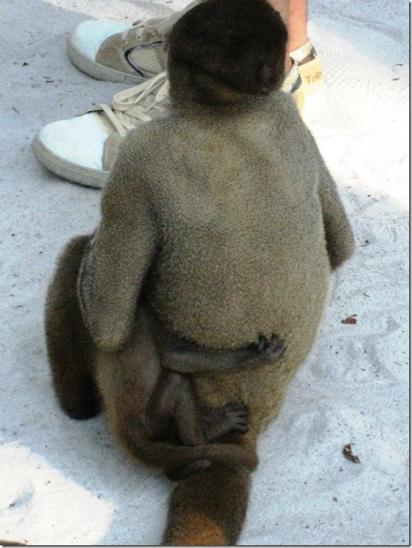 2008_07_17 Brazil Amazon Monkey Park (5)