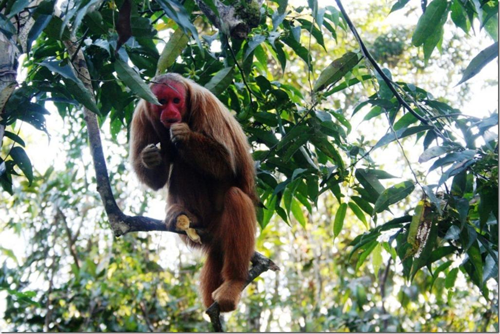 2008_07_17 Brazil Amazon Monkey Park (9)