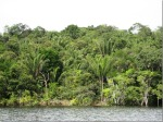 Rio Negro, Amazon, Brazil