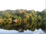 Tarumã River, Amazon, Brazil