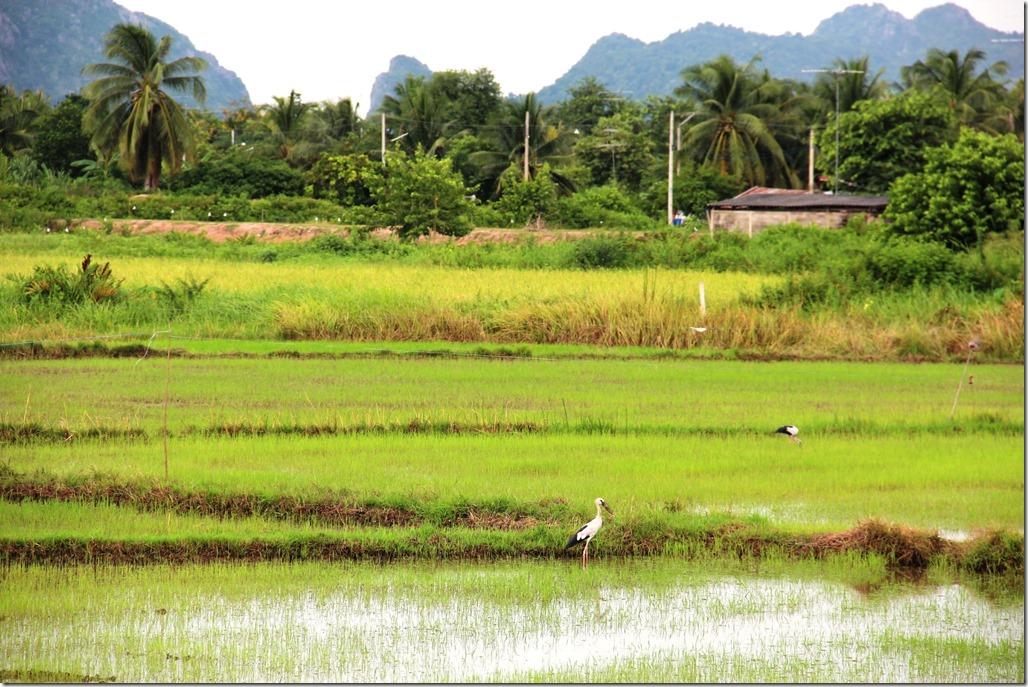 2012_09_15 Thailand Hua Hin Countryside (2)