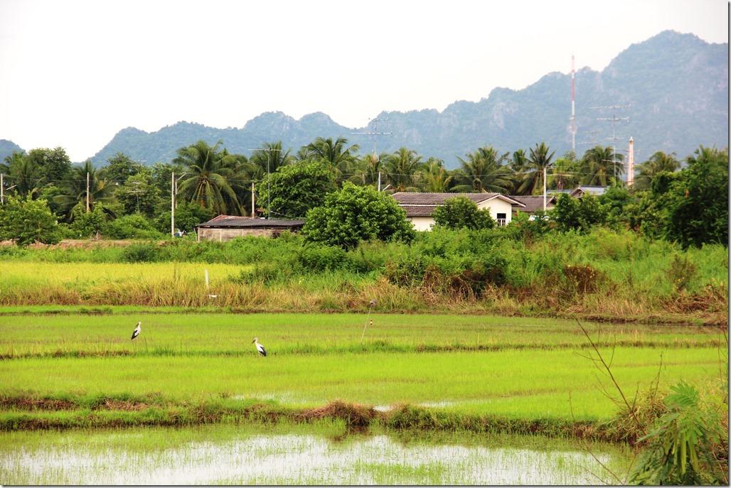 2012_09_15 Thailand Hua Hin Countryside (3)