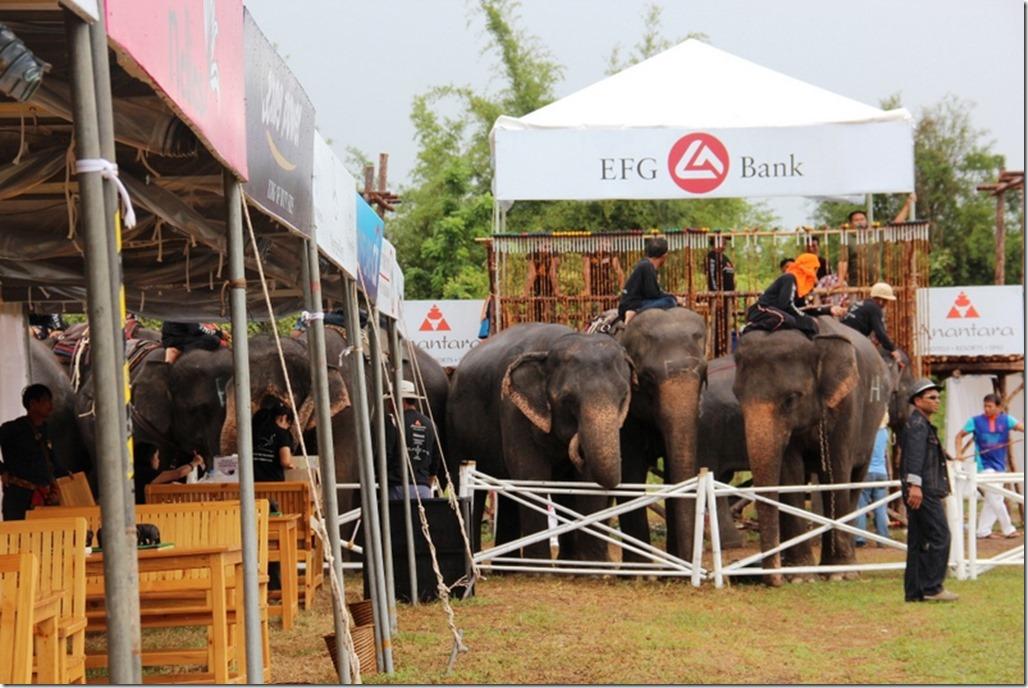 2012_09_06 Thailand Hua Hin Elephant Polo (3)