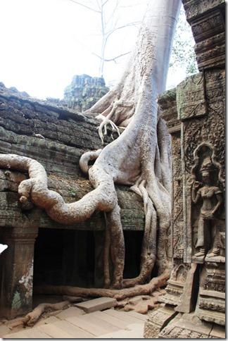 2012_12_27 Cambodia Angkor Te Prohm (5)