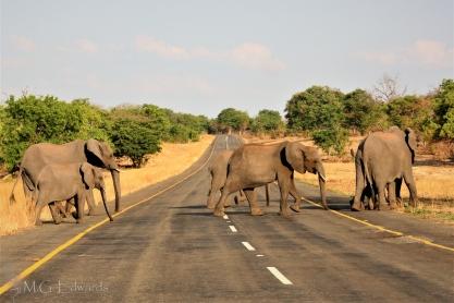 2010_11_06 Zimbabwe IMG_0951